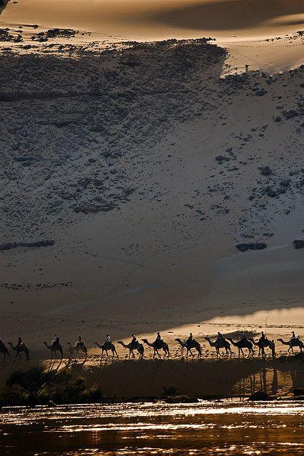 Camels on the road to nubian village - Cammelli sulla strada per il villaggio nubiano - Aswan - Egypt