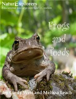 Study frogs and toads in their habitat through this nature study guide.  There are lots of activities for you to do to learn about frogs and toads even if you don't have hands-on access to them, too!