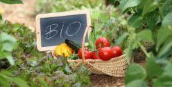 Bon plan : une nouvelle application gratuite et très simple à utiliser vient d'être lancée pour aider tous les jardiniers professionnels ou amateurs à cultiver en biodynamie.