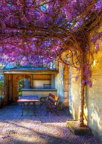 door het licht inval is het plaatje romantisch. er zit geel in en paars, wat complementaire kleuren zijn en elkaar dus versterkt. de boom is natuur en zachte vormen, terwijl de muur hard is en door de mens is gemaakt, dit is ook een versterkend effect.