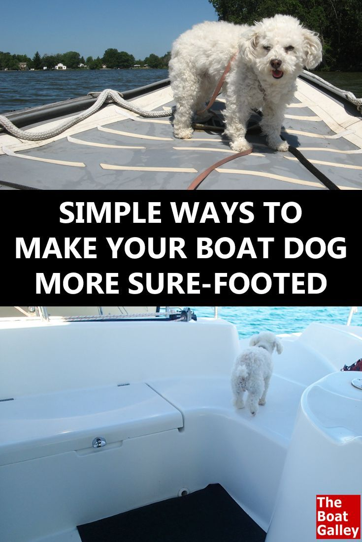 107 best boat dogs images on pinterest boats html and animals