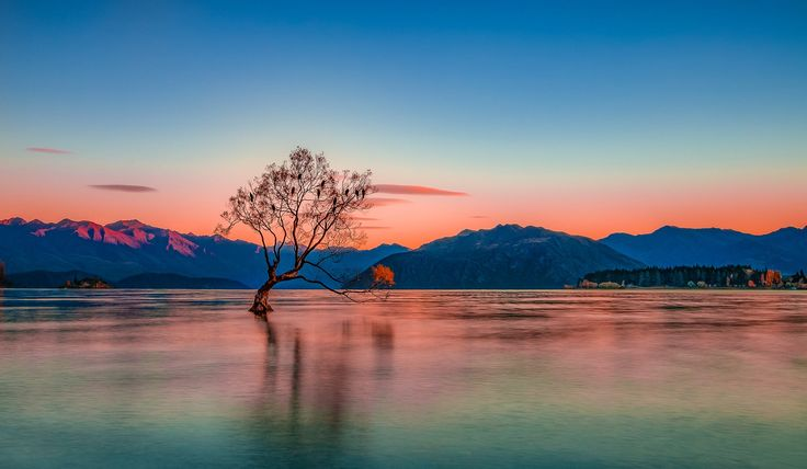 The Wanaka Tree at Sunrise by Angela Chong