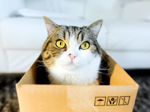 Maru the much filmed Japanese cat & 28 best Maru Gets His Own Board images on Pinterest | Kitty ... Aboutintivar.Com