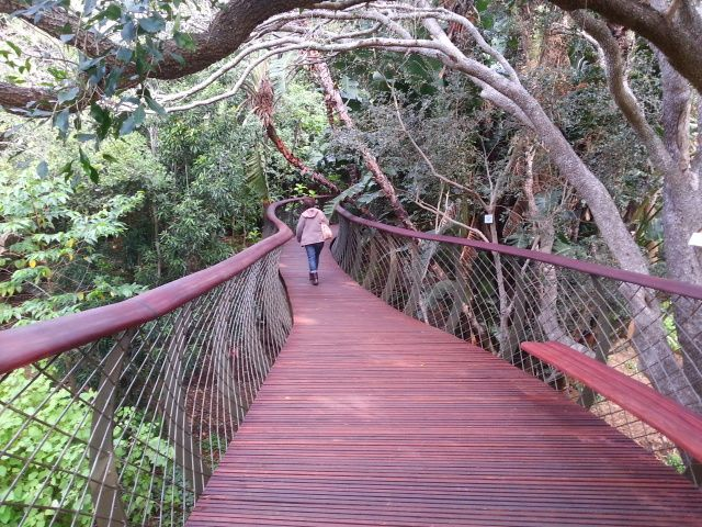 Visit the Kirstenbosch Botanical Gardens and walk along the tree canopy walk, known as the Boomslang.