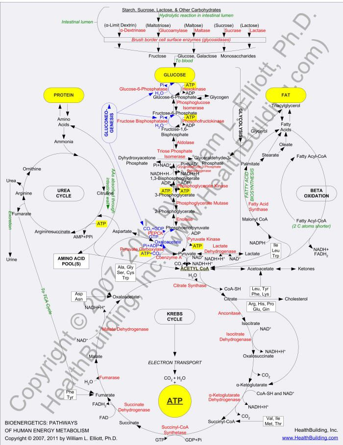 Mechanisms of Cellular Signal Transduction