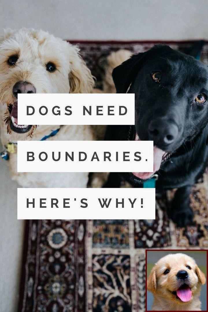 1 Have Dog Behavior Problems Learn About Abused Dog Behavior