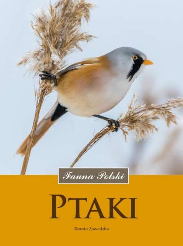 Książka Ptaki Fauna Polski / Dorota Zawadzka, Multico, 85,97 zł, okładka twarda, Sto tysięcy przecenionych książek, sprawdź teraz!