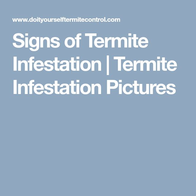 Signs of Termite Infestation | Termite Infestation Pictures