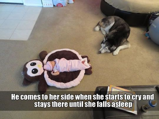 Dog takes care of baby sleeping