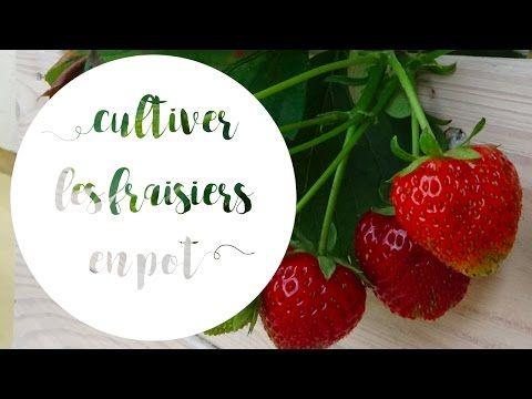 comment avoir de belles fraises en pot youtube. Black Bedroom Furniture Sets. Home Design Ideas