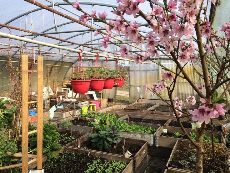 Urban Farming Fællesgartneriet Denmark