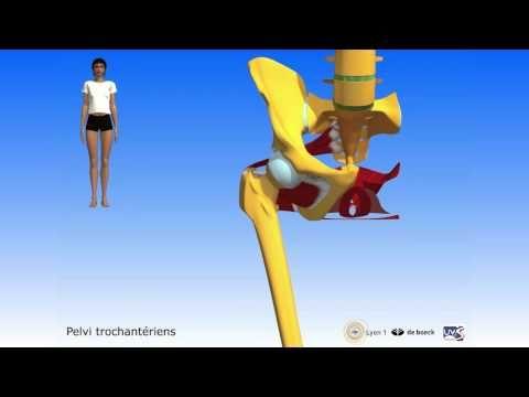 Apprendre l'anatomie grâce à la 3D - YouTube