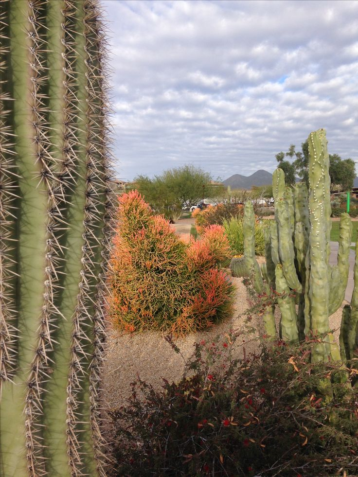 32 best images about Beautiful Fountain Hills