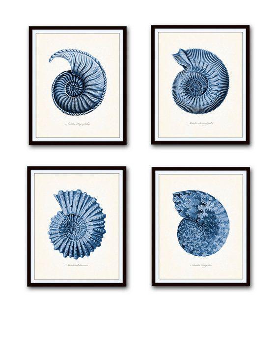 Indigo bleu Nautilus Shell imprimer ensemble, Ernst Haeckel, jet d'encre, estampes, affiches, Art nautique, décor côtier, coquillage tirages, bleu