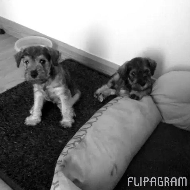 Pequeños cachorros (null) Hecho con Flipagram - http://flipagram.com/f/dSox7XLIbK