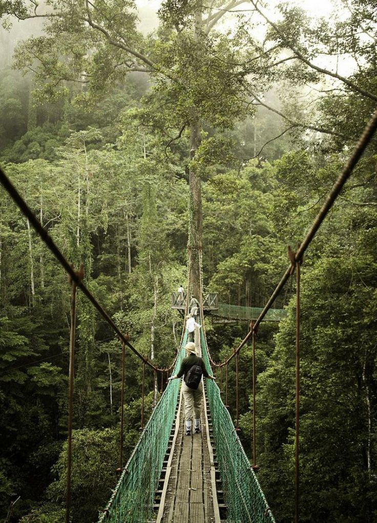 Rainforest Canopy Walkway is located in Danum Valley Conservation Area which is situated on the north coast of the island of Borneo (The part ruled by Malaysia)
