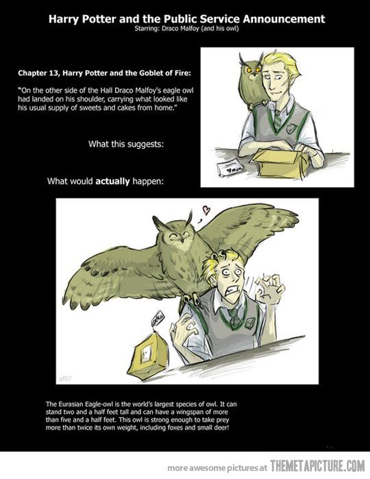 Draco Malfoy and his owl… I love how happy the owl looks in the second picture. - My mentor in high school's dog was picked up by an owl with a 12 ft wingspan and dropped 200 ft, breaking one leg.