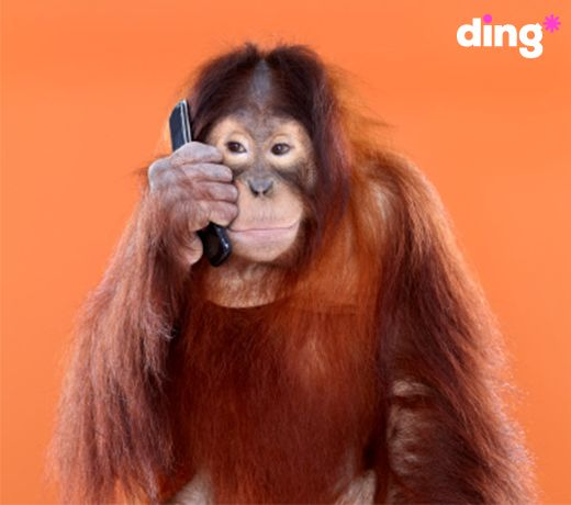 'Mom! I don't care what you say, I won't stop monkey-ing around!' #dinganimals  www.ding.com