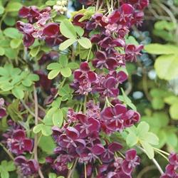 Shade Garden Ideas Zone 9 58 best perennials images on pinterest | perennials, garden plants