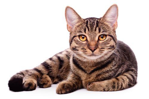 ¿cuanto vive un gato? - http://www.golpedirecto.com/cuanto-vive-un-gato/
