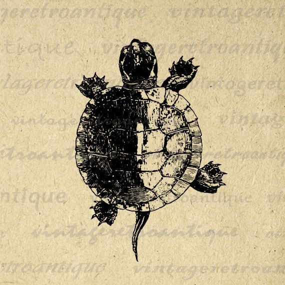 Printable Tortoise Turtle Graphic Download Illustration Digital Image Vintage Clip Art. High resolution digital graphic for making prints, transfers, and more great uses. Great for use on etsy items. This graphic is large and high quality, size 8½ x 11 inches. Transparent background PNG version included.