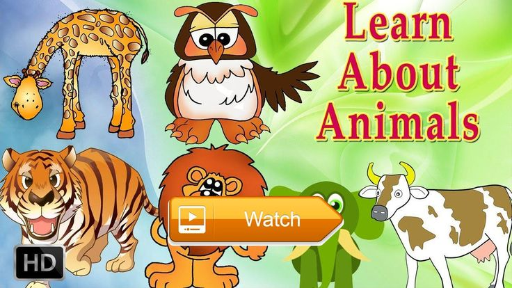 Baby animals Logic Puzzle Learn the Animals Color Puzzles for Children by first step  How Do DIY worlds longest worm Play Doh Learn color worm Learn colors with Body Paint Nursery Rhymes and toes for Kids Legs to find  on Pet Lovers
