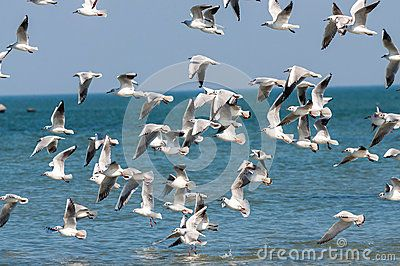 Big group of seagull flying, freedom concept.