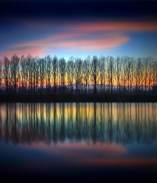 ❖ Lined trees with amazing sky and reflections