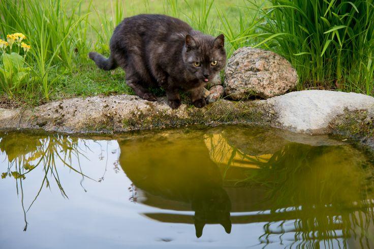 Mötet i dammen