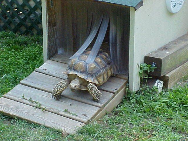 Outdoor tortoise door.