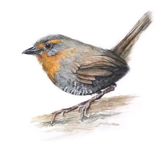 Bird Watercolor Chucao Tapaculo Art Print Forest by OlechkaDesign