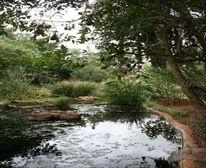 Pond at Satara Restcamp