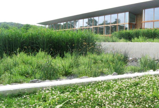 Tratamento de esgoto doméstico com plantas é alternativa para evitar poluição dos rios