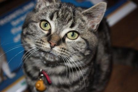 Definitely the cutest kitten ever...