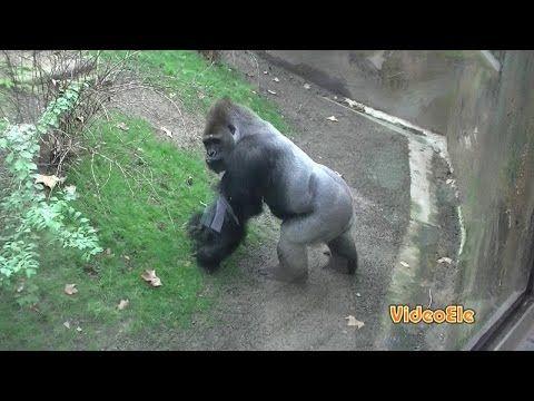 Animales salvajes. (latino) Nivel A2 - YouTube
