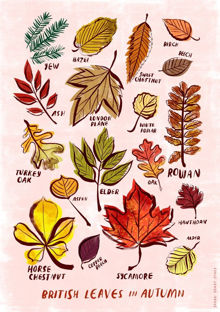 """British Leaves of Autumn"" by Sarah Tanat Jones"