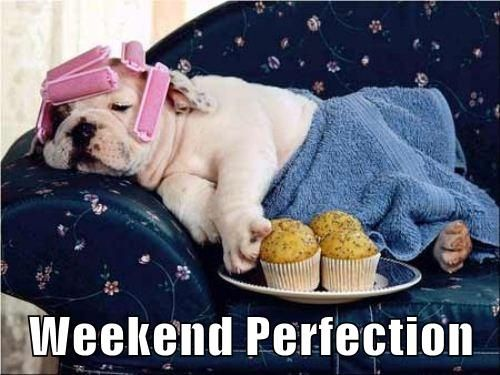 Hope your weekend includes some relaxing... and muffins. Happy Friday Everybody! #Friday #Dogs #Funny