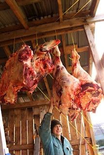 How to Butcher a Cow or Beef Butchering- Graphic