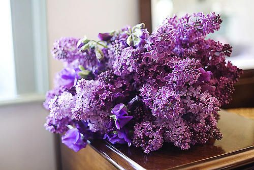lilacs: Ideas Wedding, Favorite Flowers, Favorite Colors, Wedding Bouquets, Flowers Centerpieces Ideas, Beautiful Flowers, Sweet Peas, Purple Bouquets, Lilacs Flowers