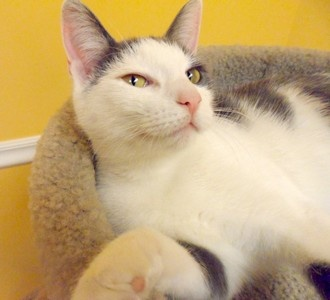 Fern is looking for a playful home! #HumaneAnimalTreatment Society #MountPleasantMI #PetSmart