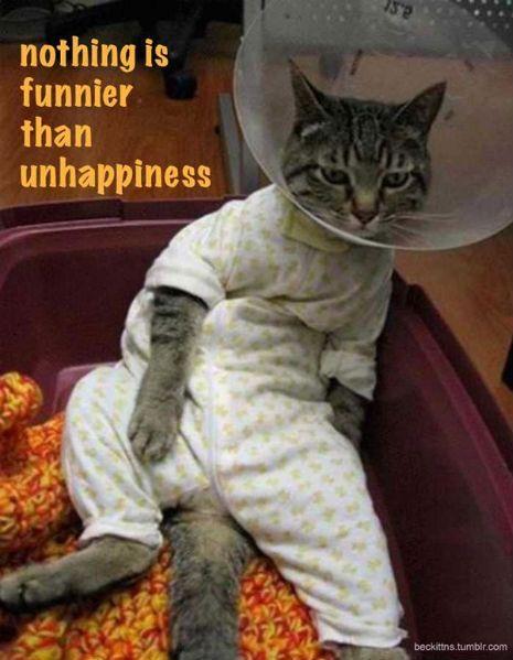 'Samuel Beckett Motivational Cat Posters'   Dangerous Minds