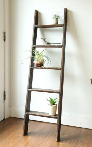 La plante comme objet déco