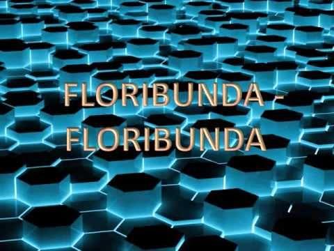 Floribunda - Floribunda