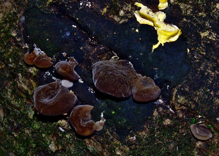 Wood rotting fungi by Paco-Meijer.deviantart.com on @DeviantArt
