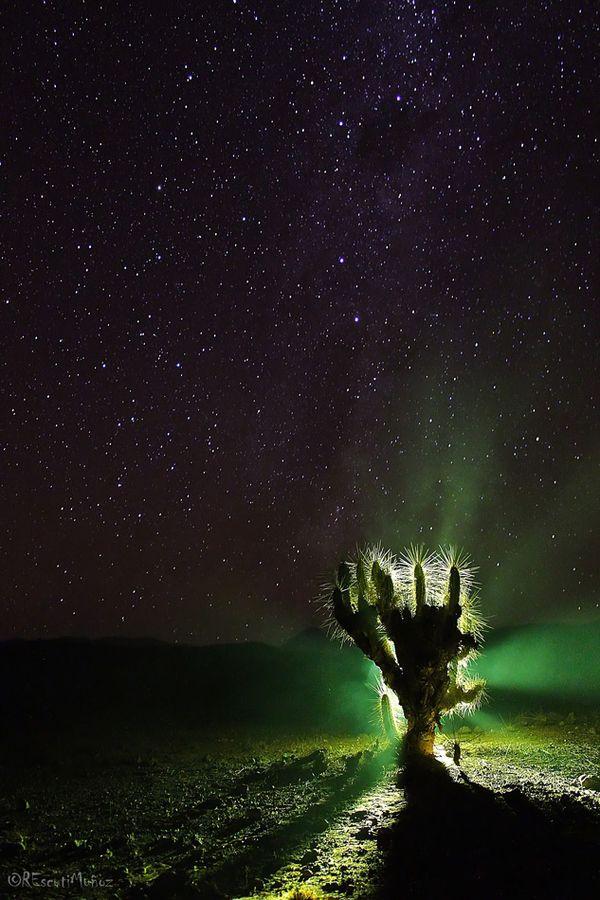 """""""Cactus Superstar"""" by Rodrigo Escuti, via 500px."""