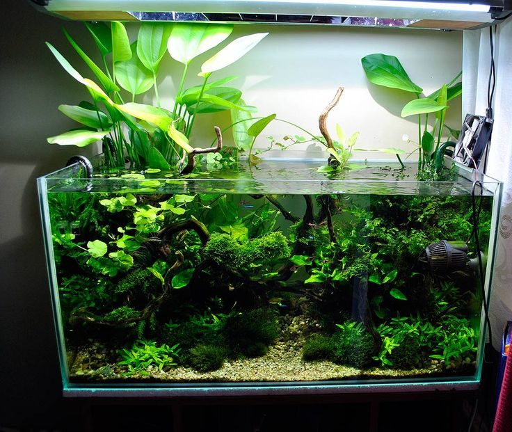 Aquarium 90x45x45 Rear 'mist'Filtration: 2x Eheim 2217 + kasada FZN-3Lighting: 2x36W + 2x70HQI Substrate: ADA Amazonia II, ADA S...