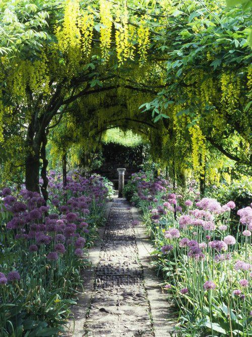 pathway (Agapanthus? ) 藤、ねぎ坊主