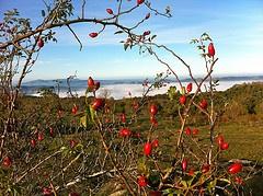 El Pla de la Calma, Parc Natural del Montseny