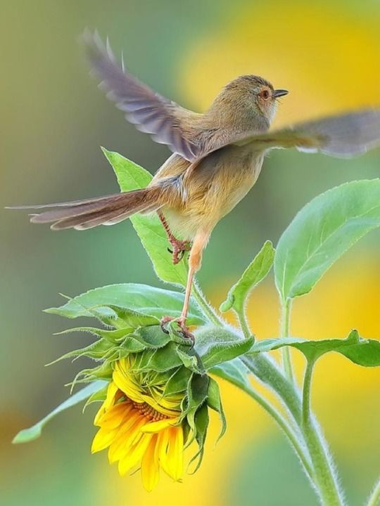 La Naturaleza Es Tu Paraiso Y El Cielo Tu Sueno De Libertad Aves