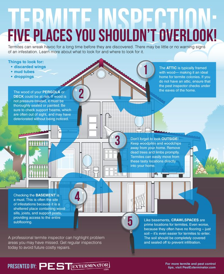 Termite Inspection: Five Places You Shouldn't Overlook!